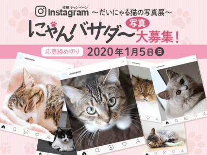 大丸が猫の写真を募集中ニャ!2020年2月から「だいにゃる猫の写真展」開催が決定