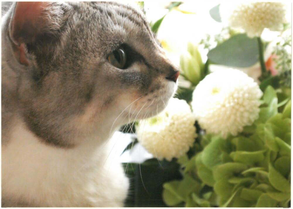 フラワーアレンジメントと猫の横顔 by 大佛次郎×ねこ写真展の入賞作品