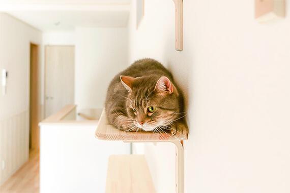 キャットステップでくつろぐ猫 by ワコーレヴィアーノ高丸 猫の家