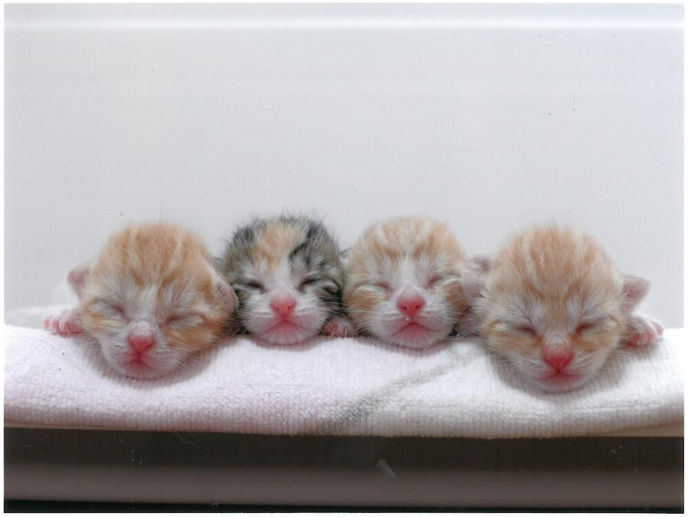 4匹の生まれたての子猫の写真 by 大佛次郎×ねこ写真展の入賞作品