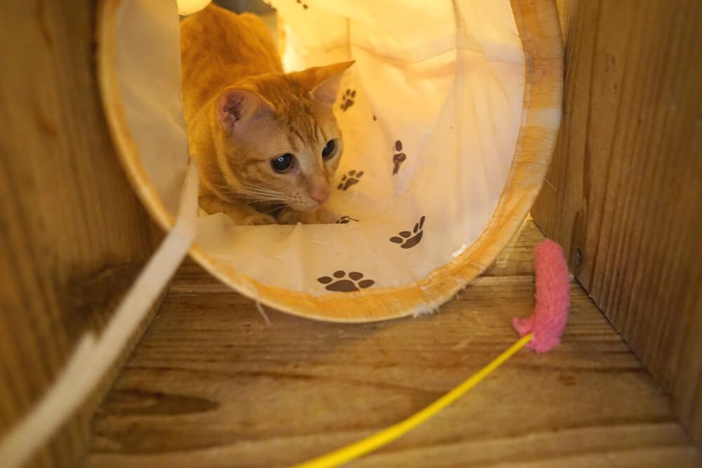 保護猫と猫じゃらしで遊ぶ様子 by SAVE CAT CAFE(セーブキャットカフェ)