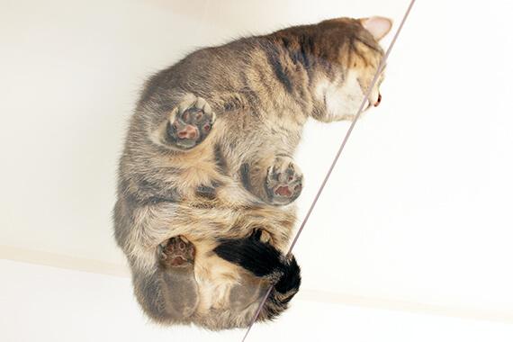 透明ガラスのキャットウォークから透ける猫の肉球 by 猫と暮らせる2階建ての賃貸住宅「猫の家」