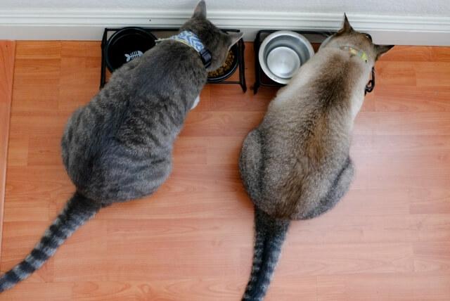 猫の食事管理イメージ