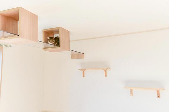 キャットウォークの途中にある箱に隠れる猫 by 猫と暮らせる2階建ての賃貸住宅「猫の家」