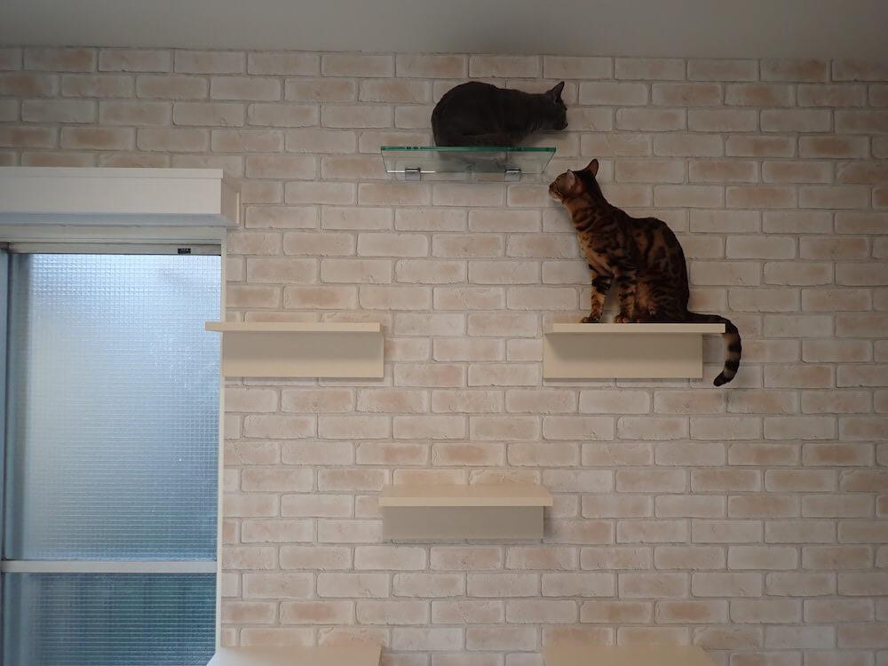 目黒の猫共生住宅「ねことすまふ」の室内イメージ