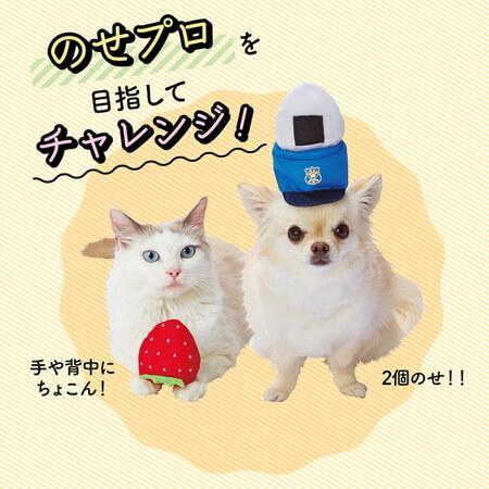 ペット向け衣装のせぐるみを犬の頭に2個乗せたイメージ by ペティオ(Petio)