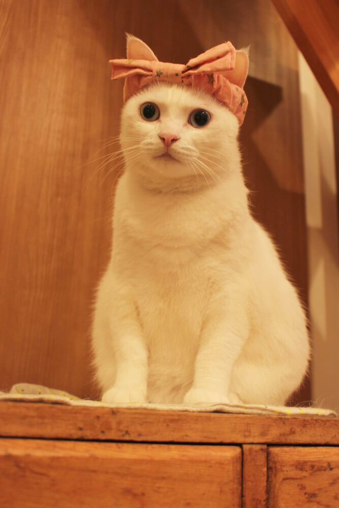 バンダナを巻いた白猫 by Mai