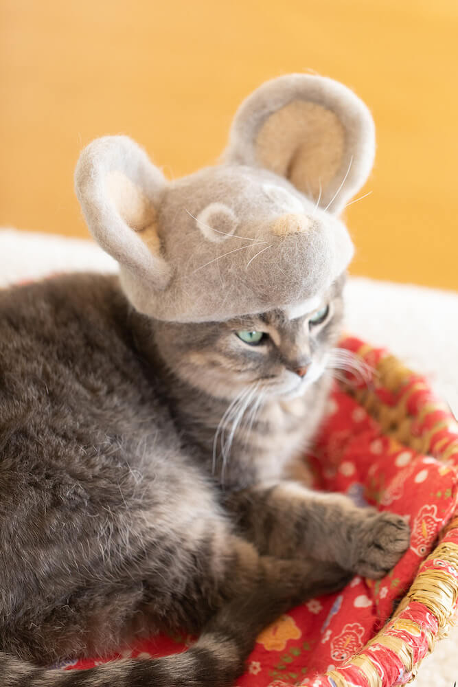 ネズミの抜け毛アートの帽子をかぶる猫 by rojiman
