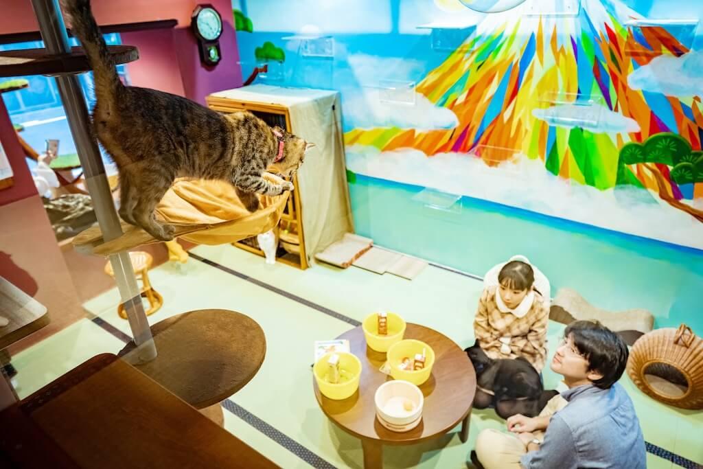 部屋の中から眺める営業中の猫カフェの様子 by ホテル「ねこ旅籠(ねこはたご)」