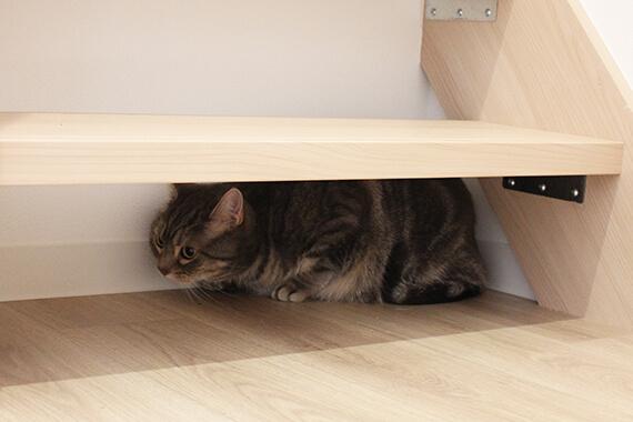 階段下にある猫の隠れ場所 by 猫と暮らせる2階建ての賃貸住宅「猫の家」