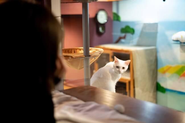 窓の外から宿泊客を眺める猫の様子 by ホテル「ねこ旅籠(ねこはたご)」