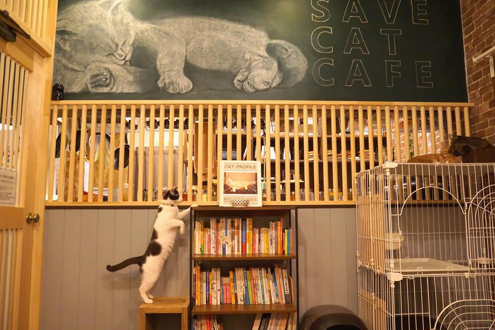 保護猫カフェ「SAVE CAT CAFE(セーブキャットカフェ)」の店内イメージ