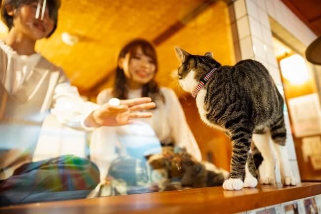 部屋の中からガラス1枚を隔てて猫を眺められるホテル「ねこ旅籠(ねこはたご)」