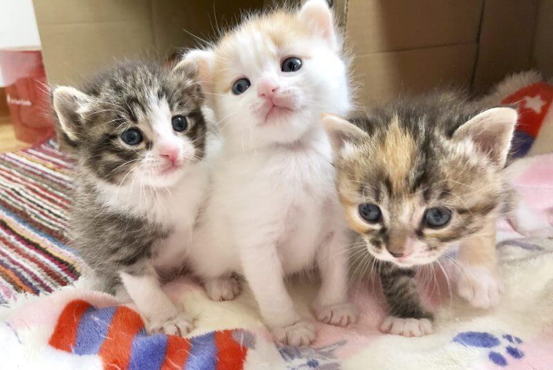 子猫のイメージ写真