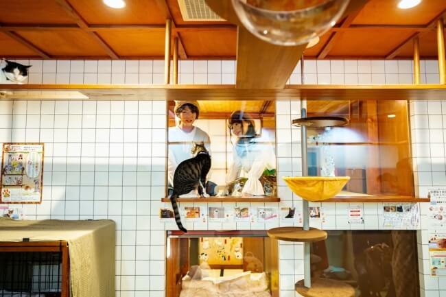 猫カフェと隣り合っているホテル「ねこ旅籠(ねこはたご)」