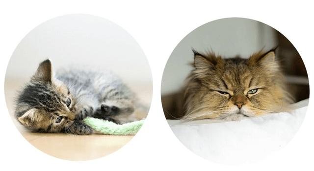 大丸東京店の猫写真展「だいにゃる猫の写真展」の作品イメージ1