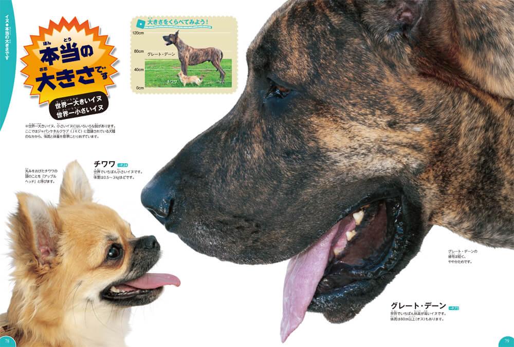 世界一大きい品種と世界一小さい品種を実物大で比較 by 学研の図鑑LIVE イヌ・ネコ・ペット