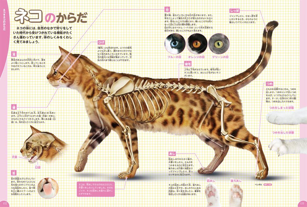 ネコの体のしくみを解説したページ by 学研の図鑑LIVE イヌ・ネコ・ペット