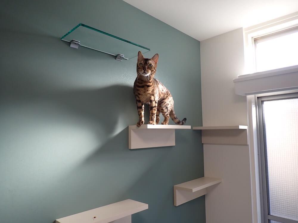 目黒の猫共生住宅「ねことすまふ」のキャットステップをのぼる猫