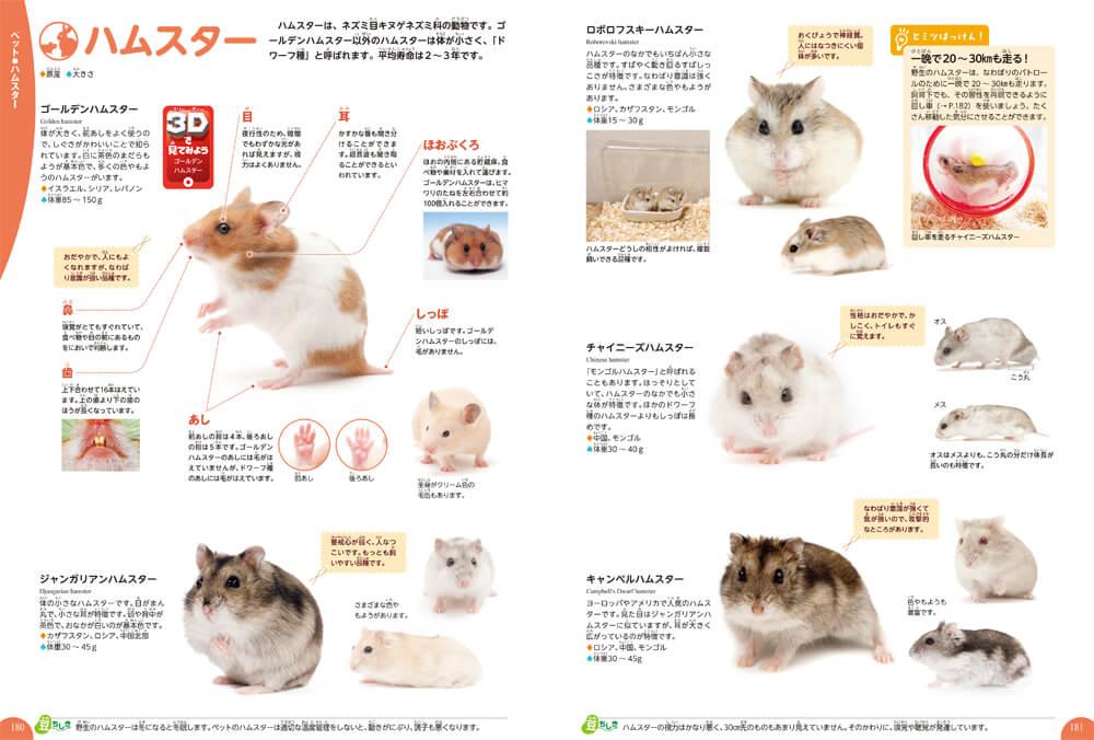 ハムスターのページ by 学研の図鑑LIVE イヌ・ネコ・ペット