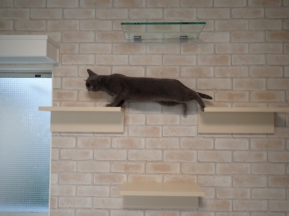 目黒の猫共生住宅「ねことすまふ」のキャットステップを渡る猫