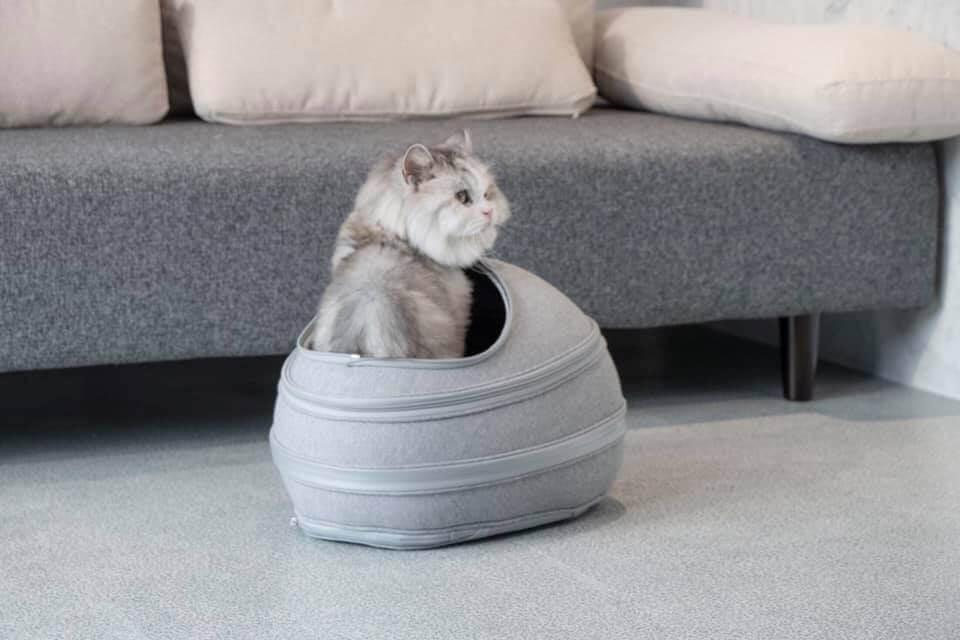 リュック型の猫ハウス「EGGY」でくつろぐ猫
