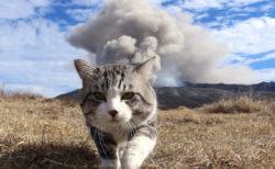 あの旅猫ニャン吉もやってくる!猫をテーマにした写真展と音楽コンサートが両国で開催