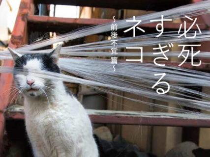 芸人や漫画家とのトークライブもあるニャ!猫写真家・沖昌之さんの写真展が1月22日より開催