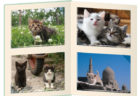 2年連続で開催決定!ベローチェの系列全店で岩合さんの猫グッズがもらえるキャンペーンが始まるニャ