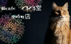南アジアのエスニックな雰囲気がただよう猫カフェ「ぐるぐる堂」大阪・中崎町にオープン