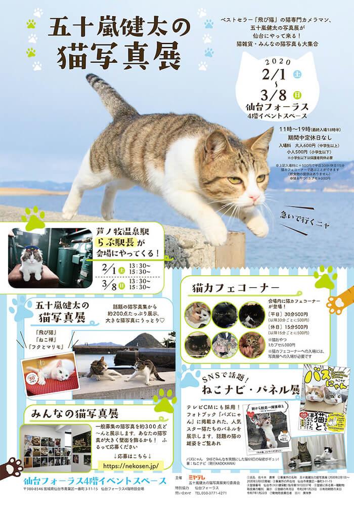「五十嵐健太の猫写真展 in 仙台」メインビジュアル