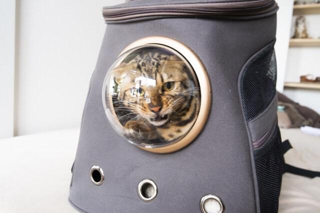 キャリーリュックで避難する猫のイメージ写真
