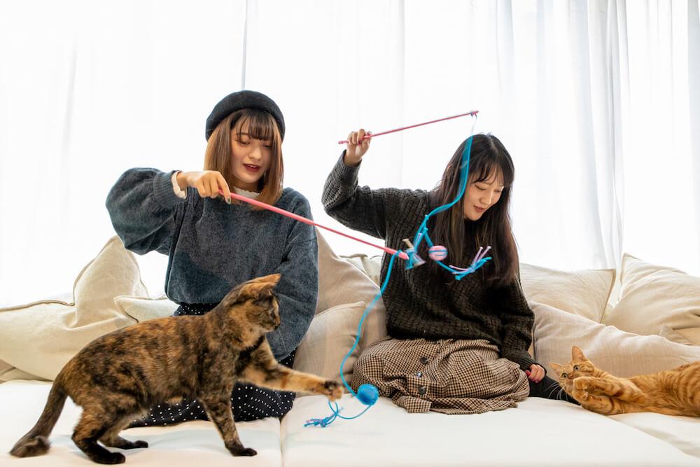 玩具で猫と遊んでいる様子 by カピねこカフェ