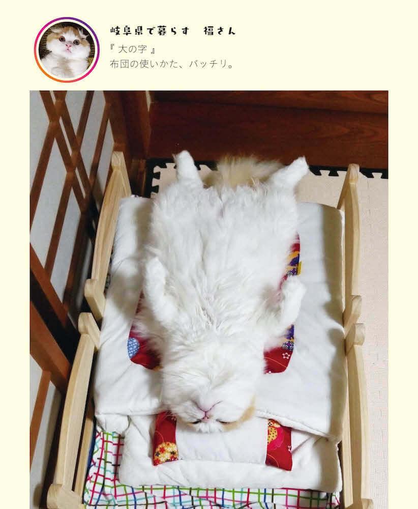 人間のおじさんのような姿勢で眠る猫 by 写真集「へそ天にゃんこ」