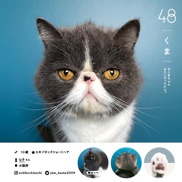 エキゾチックショートヘアの人気猫「くま」 by ねこさま名鑑100