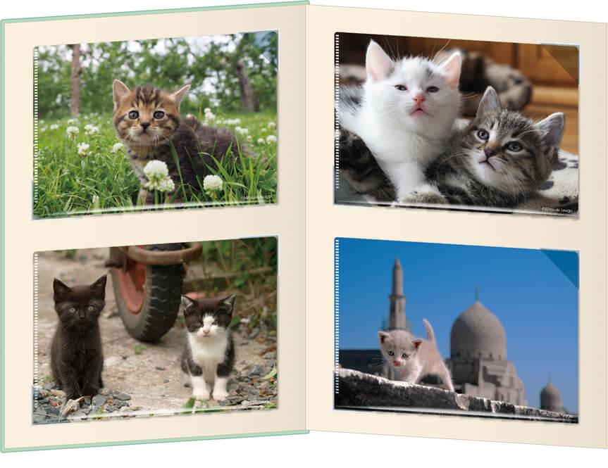 岩合光昭さんの子猫写真がデザインされたコンプリートセットの拡大イメージ1