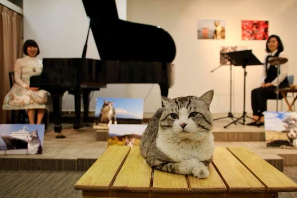 音楽コンサートの会場に来場した旅猫ニャン吉