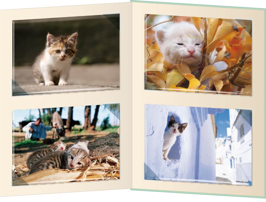 岩合光昭さんの子猫写真がデザインされたコンプリートセットの拡大イメージ2