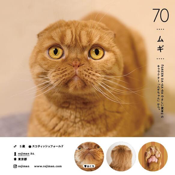 スコティッシュフォールドの人気猫「ムギ」 by ねこさま名鑑100