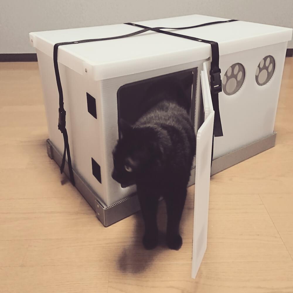 猫と同行避難するための避難用ケージ 「いっしょに避にゃん」を使用する猫