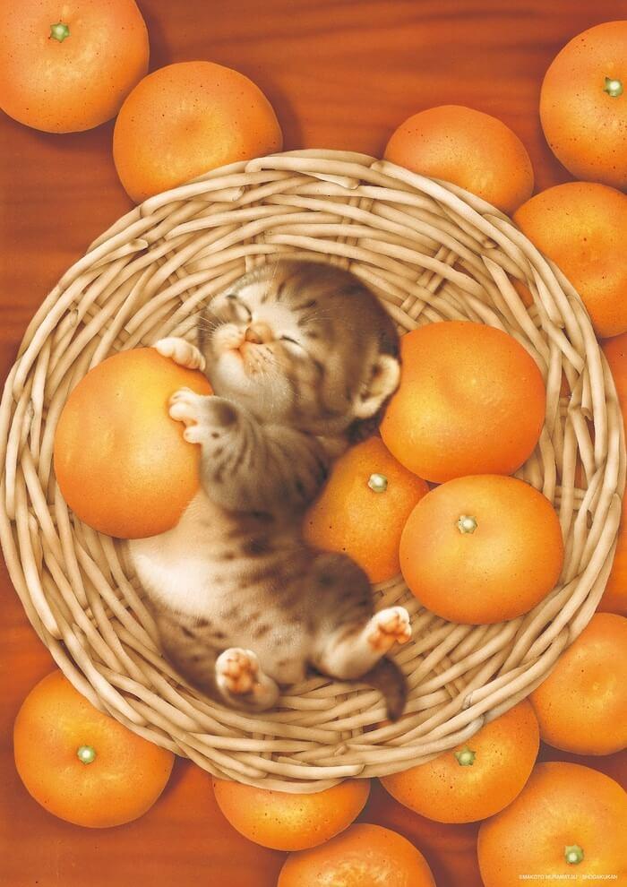 みかんを入れた籠の中で眠る猫のイラスト by 村松誠