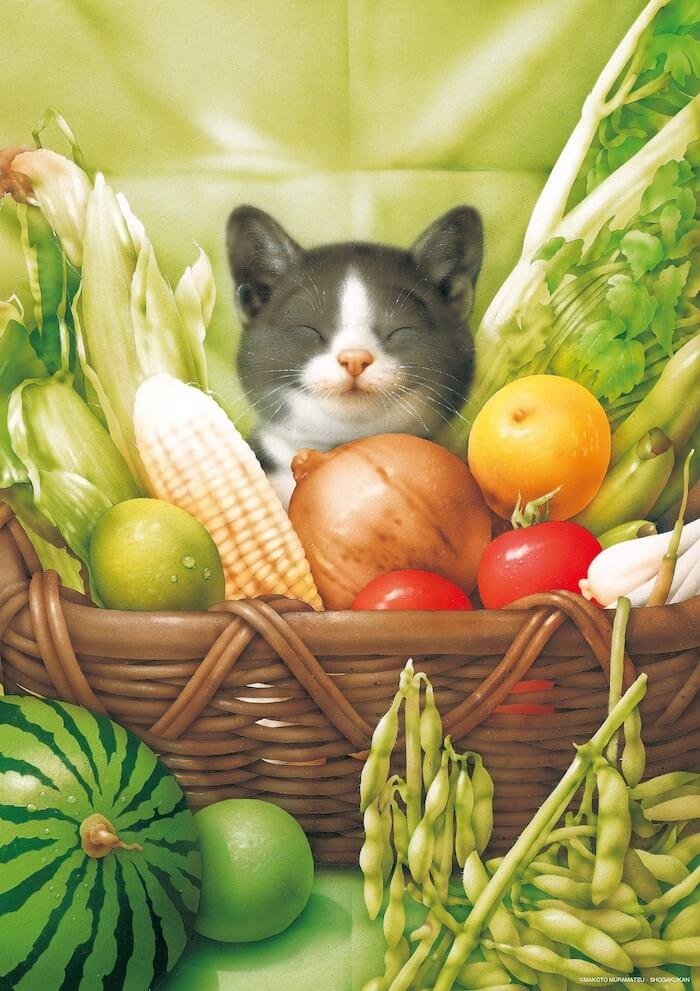 野菜を入れた籠の中で眠る猫のイラスト by 村松誠