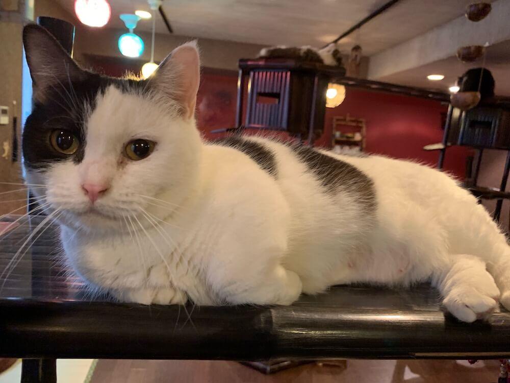 南アジア風のエスニックな雰囲気が漂う猫カフェ「ぐるぐる堂 中崎町店」の店内イメージ