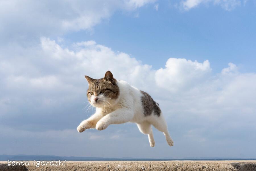 飛び猫の写真 by 五十嵐健太