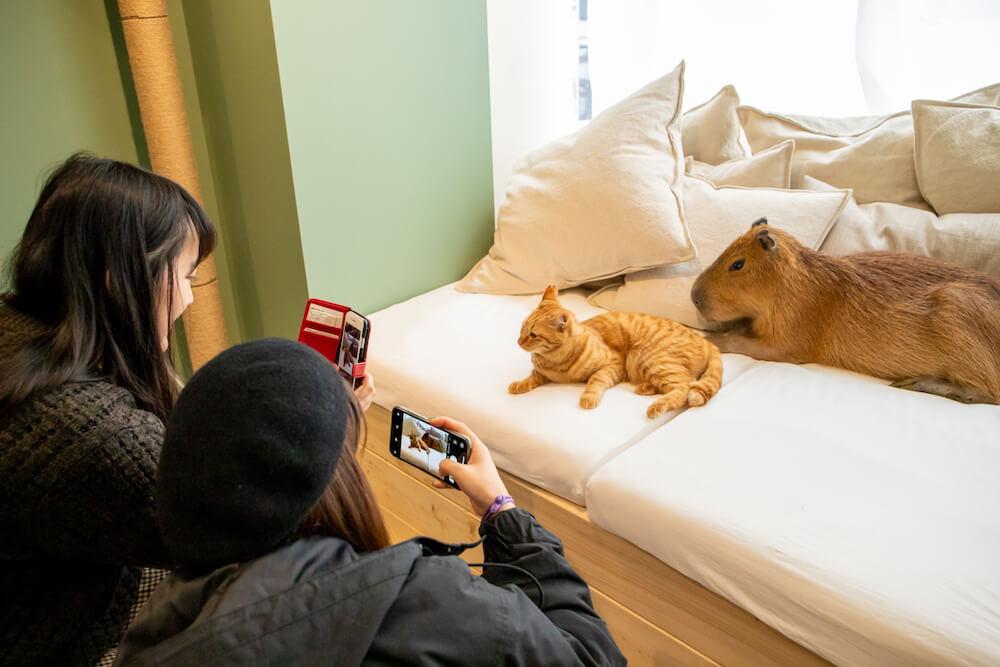 カピバラと猫のツーショット写真 by カピねこカフェ