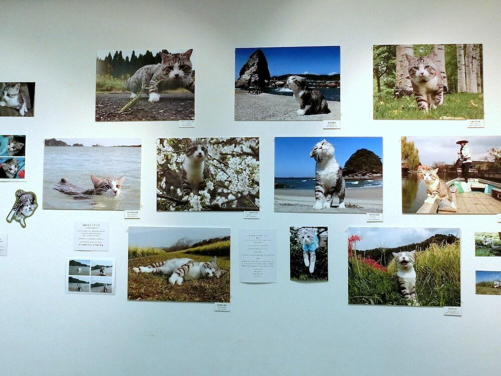 旅猫ニャン吉の展示会イメージ