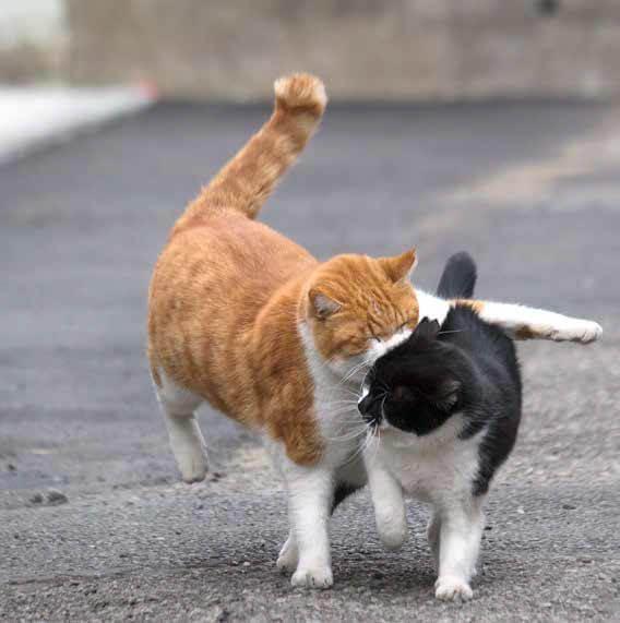 必死すぎて衝突する2匹の猫 by 沖昌之「必死すぎるネコ ~前後不覚篇~」