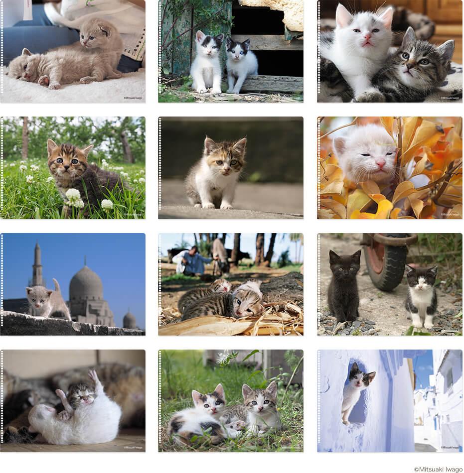 子猫をテーマにした12種類のクリアファイル