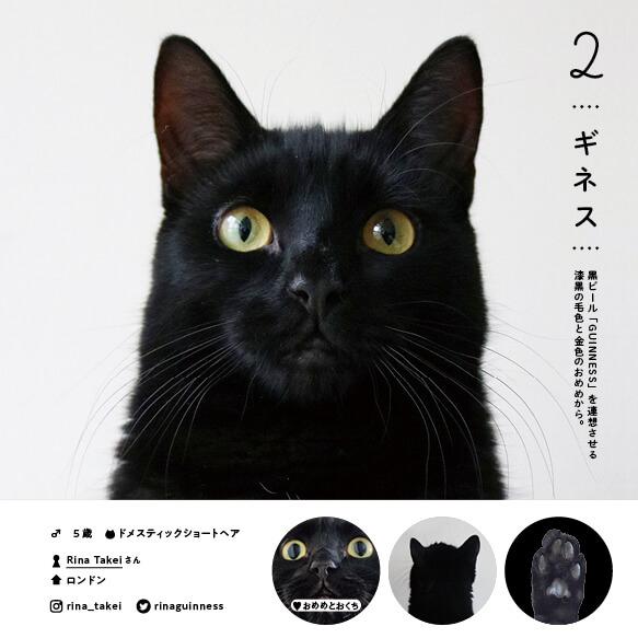 ドメスティックショートヘアの人気猫「ギネス」 by ねこさま名鑑100