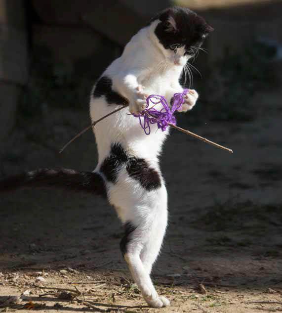 絡まった毛糸を必死で振りほどく猫 by 沖昌之「必死すぎるネコ ~前後不覚篇~」